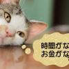猫の言い訳