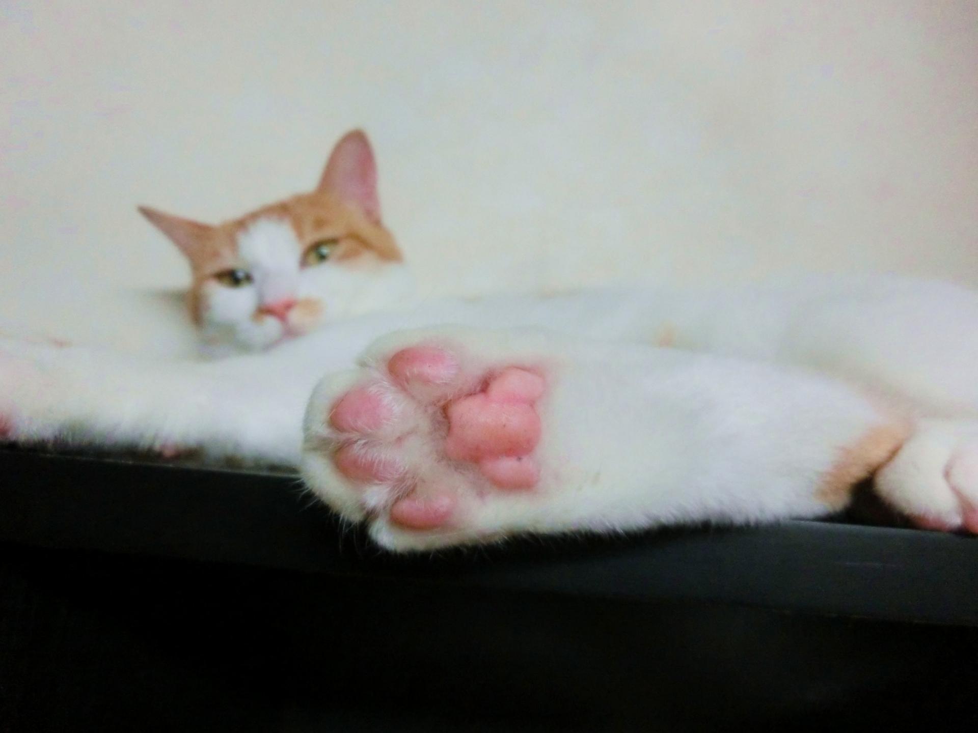 猫の肉球は柔軟